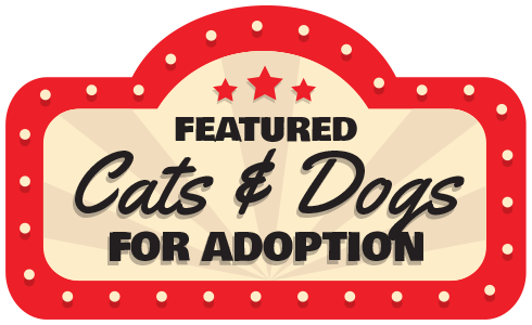Dog and Cat Adoption
