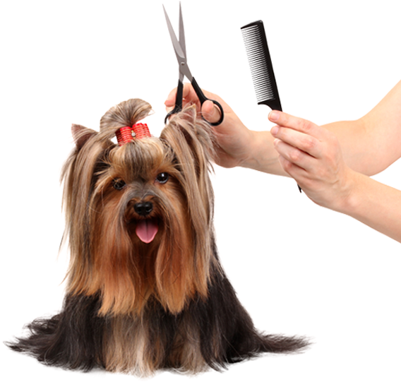 Images Of Dogs Getting Groomed