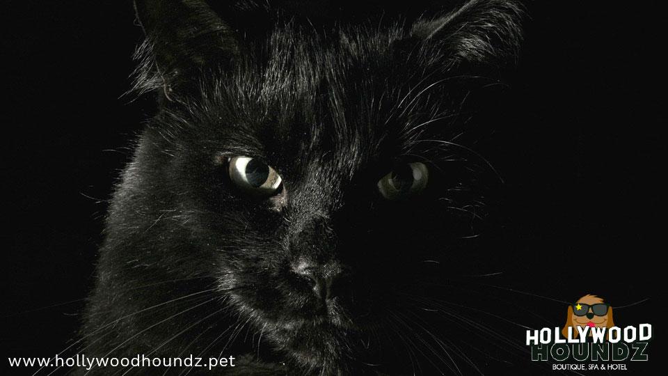 Cat Mystic